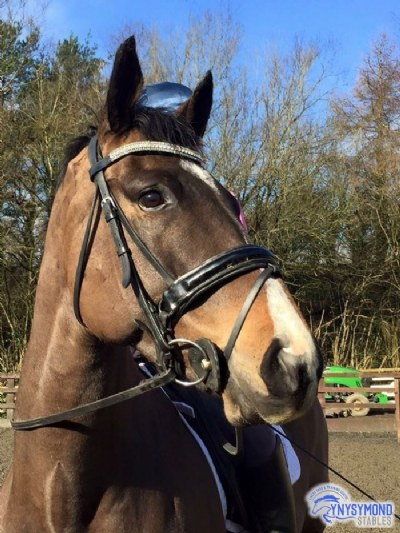 Ryan in his new browband